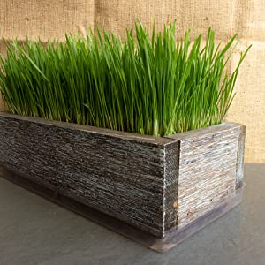 barnwood planter planting box wheatgrass kit grow your own