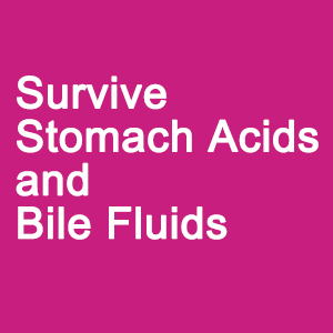 Survive Stomach Acids and Bile Fluids.