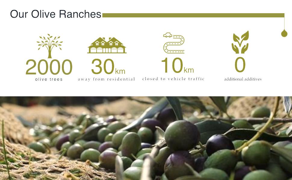olive ranches, olive oil , harvest