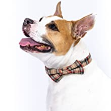 Bully bull bulldog release wool valentines patterned vintage classic classy berry checkmate diva