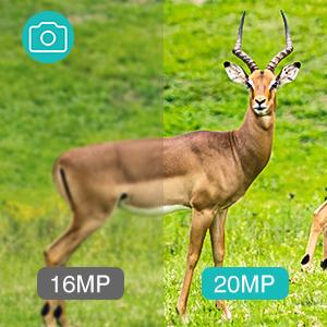 hunting video camera