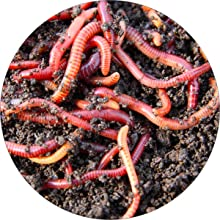 Worms and microbes go to work