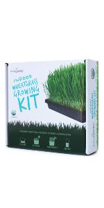 wheatgrass wheat grass growing kit handy pantry