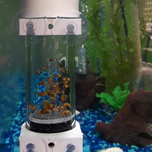 aquarium egg tumbler