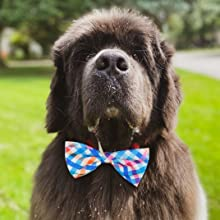 huxley and kent bowtie