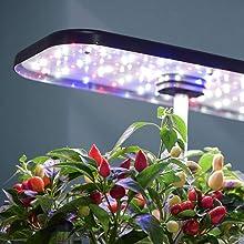 Height-Adjustable Led Lighting System