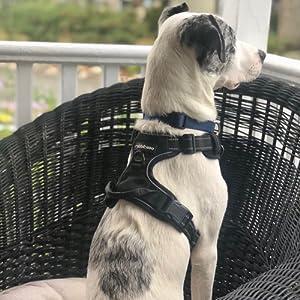 rabbitgoo dog harness large
