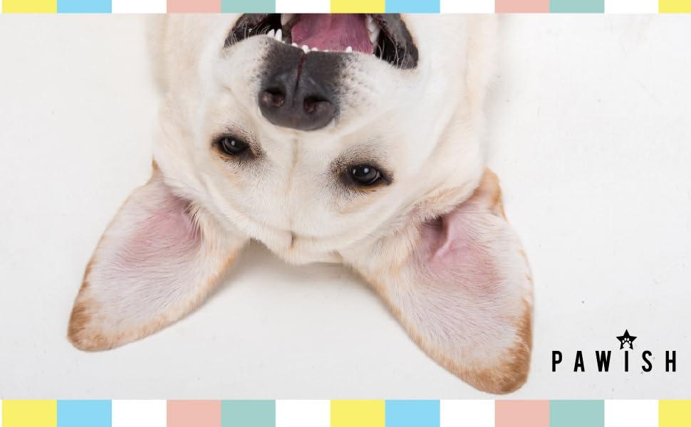 Logo Image with Happy Smiling Dog