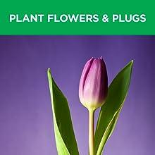 plant flowers, grass plugs, bulbs