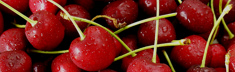Dilettante Chocolates - Chocolate Covered Bing Cherries
