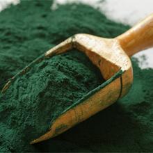 Moringa extract powder in wooden scoop