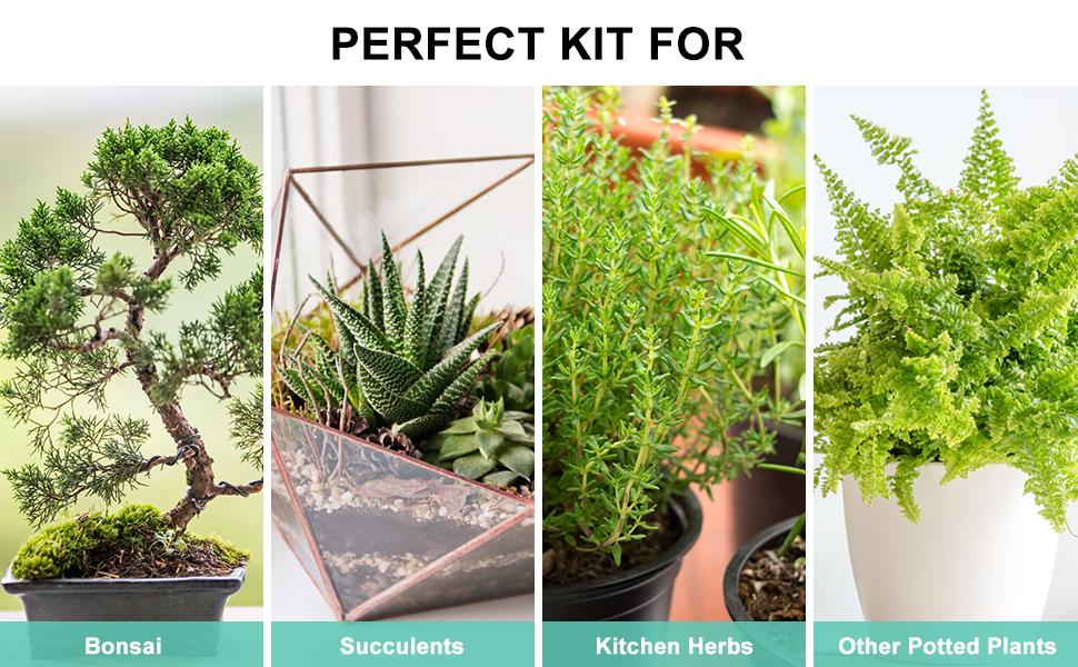 Succulent Kit