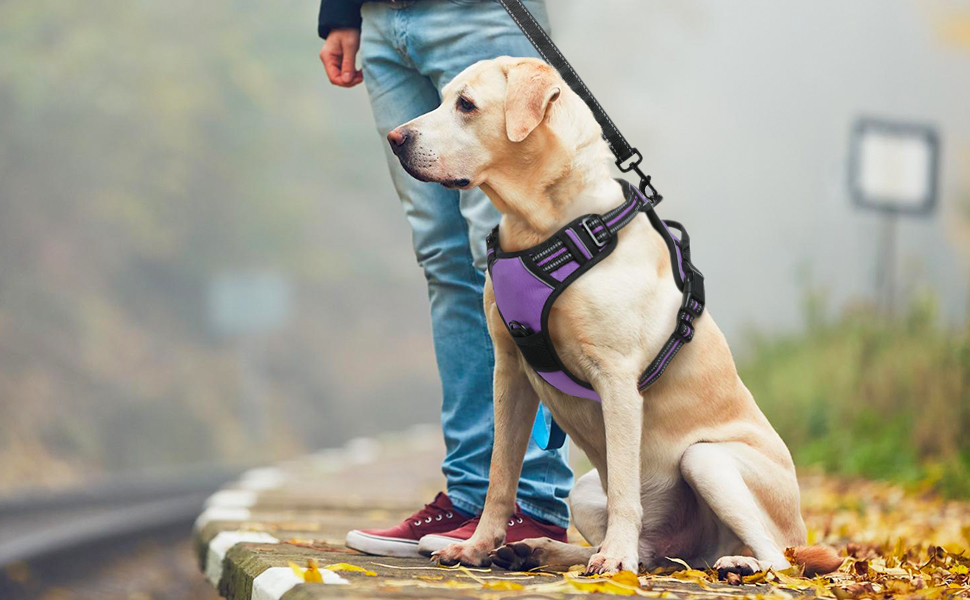 rabbitgoo Dog Harness, No-Pull Pet Harness with 2 Leash Clips, Adjustable Soft Padded Dog Vest