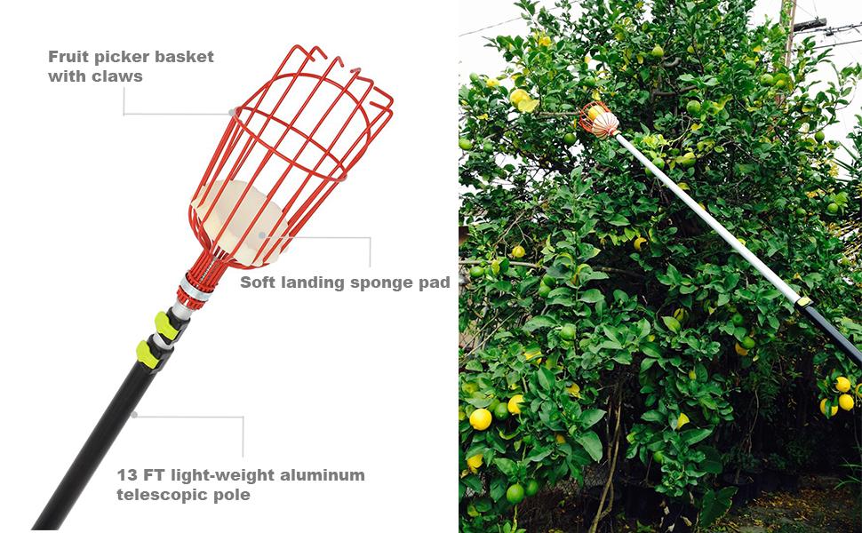 recolector de frutas telesc/ópico con bolsa Herramienta ajustable para recolectar frutas recolector de frutas con canasta y poste recolector de /árboles para obtener frutas recolector de frutas
