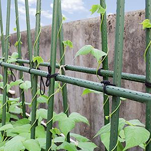 tamato stakes