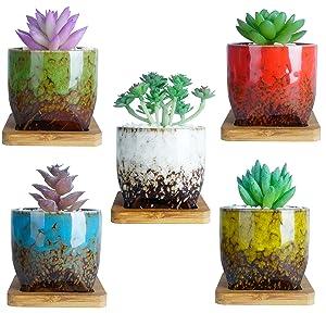 3 Inch Succulent Pots