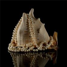 1 Pcs Navy Conch Striped 7-13 cm Natural Shells Ornament Decor Wedding
