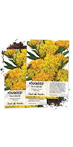 Hello Yellow Milkweed seeds for planting