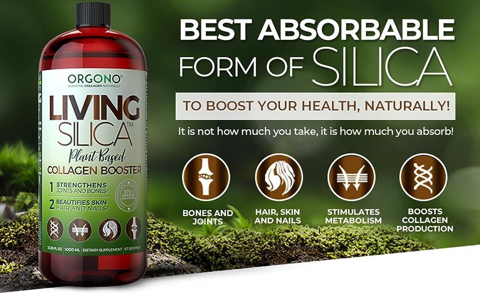 Living Silica Plant Based main image