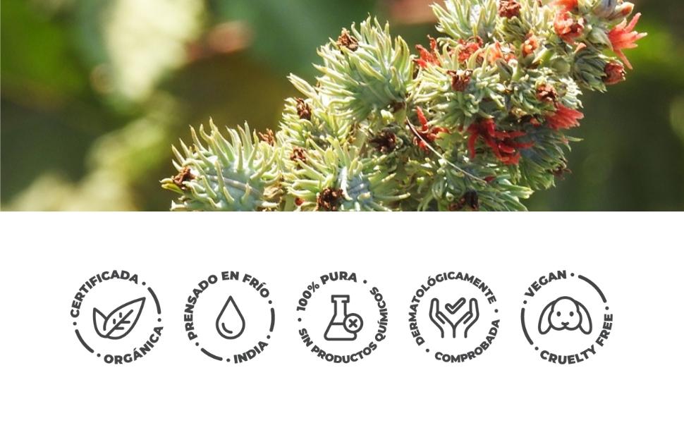 ACEITE DE RICINO ORGÁNICO   100% Puro, Natural y Prensado en Frío   Pestañas, Cejas, Cuerpo, Cabello, Barba, Uñas   Vegan Castor Oil   Botella de ...