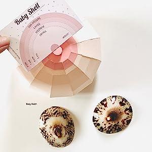 Choisir sa taille de Baby Shell