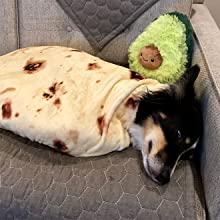ペット毛布