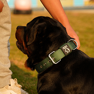 dog collar for traving
