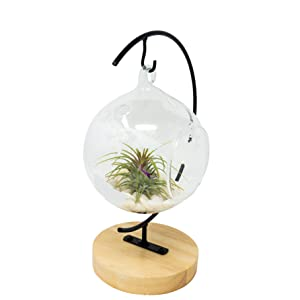 Wood stand with terrarium