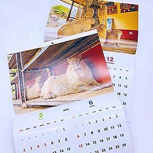 伊豆シャボテン本舗 カピバラ カレンダー 2021年 元祖カピバラの露天風呂 ぬいぐるみ&マステ付き