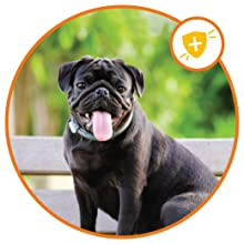 dog vitamins dog probiotics dog mulitvitamin dog vitamins and supplements multivitamin for dogs