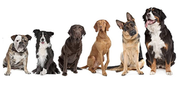 interractive dog toys