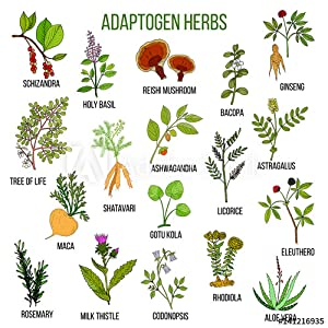 illustration of what astragalus herb looks like, plus other herbs