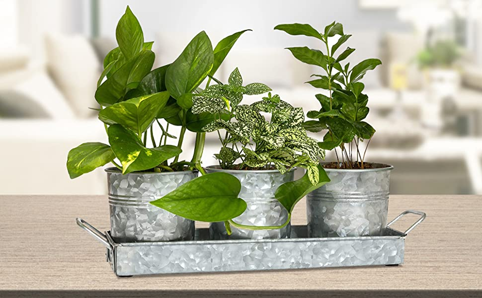 Amazon Com Farmhouse Flower Herb Pot Set With Tray Galvanized Metal Vintage Succulent Herb Planter Pots Caddy For Kitchen Windowsill Garden Indoor Or Outdoor Use By Walford Home Garden Outdoor