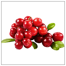 bear berry extracts