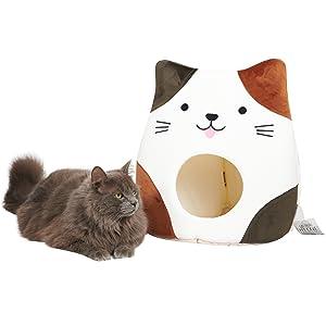 Oscar fluffy cat