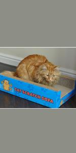 Cat Bed Scratcher