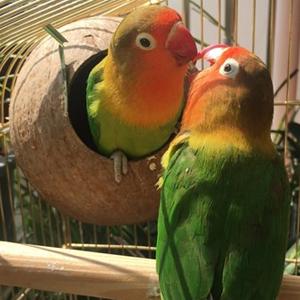 bird cage nest