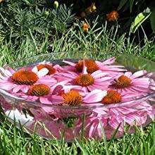 solarisation de fleurs de bach