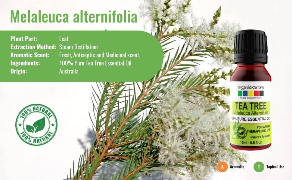 Essential Oils, Tea Tree Oil, tea tree oil for skin acne