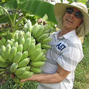 Blue Orchid Organic Bananas