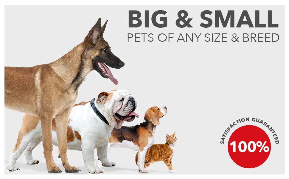 Big and Small Pets of any side and breed