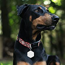 gps tracker for dogs pets