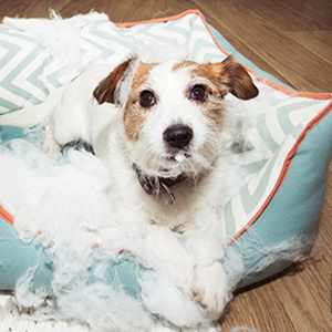 jouet chien instrctible