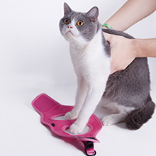 kitten harness and leash