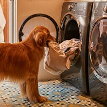 machine washable dog bed