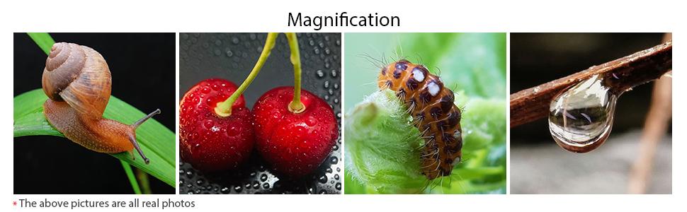 macro photoes