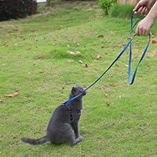 "6 feet leash,black dog leash 6 feet,purple 3/8"""