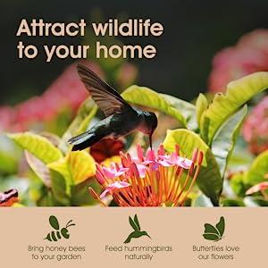 plants zinnia perennial wild nasturtium butterfly