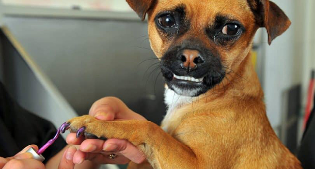 Manicure Pedicure for dogs and cats