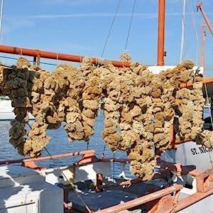 sponge boat